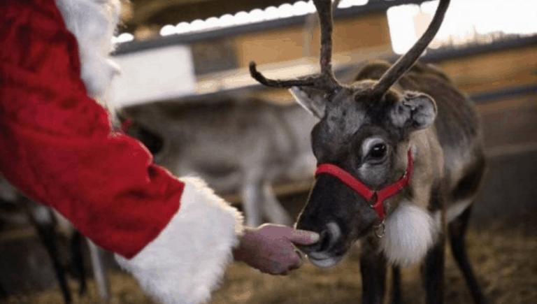 Reindeer-Food recipie