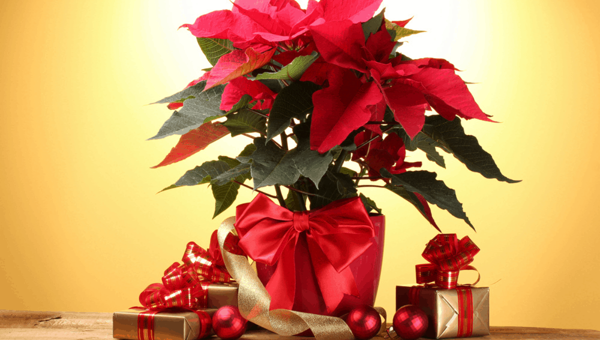 Plant gift guide for gardeners