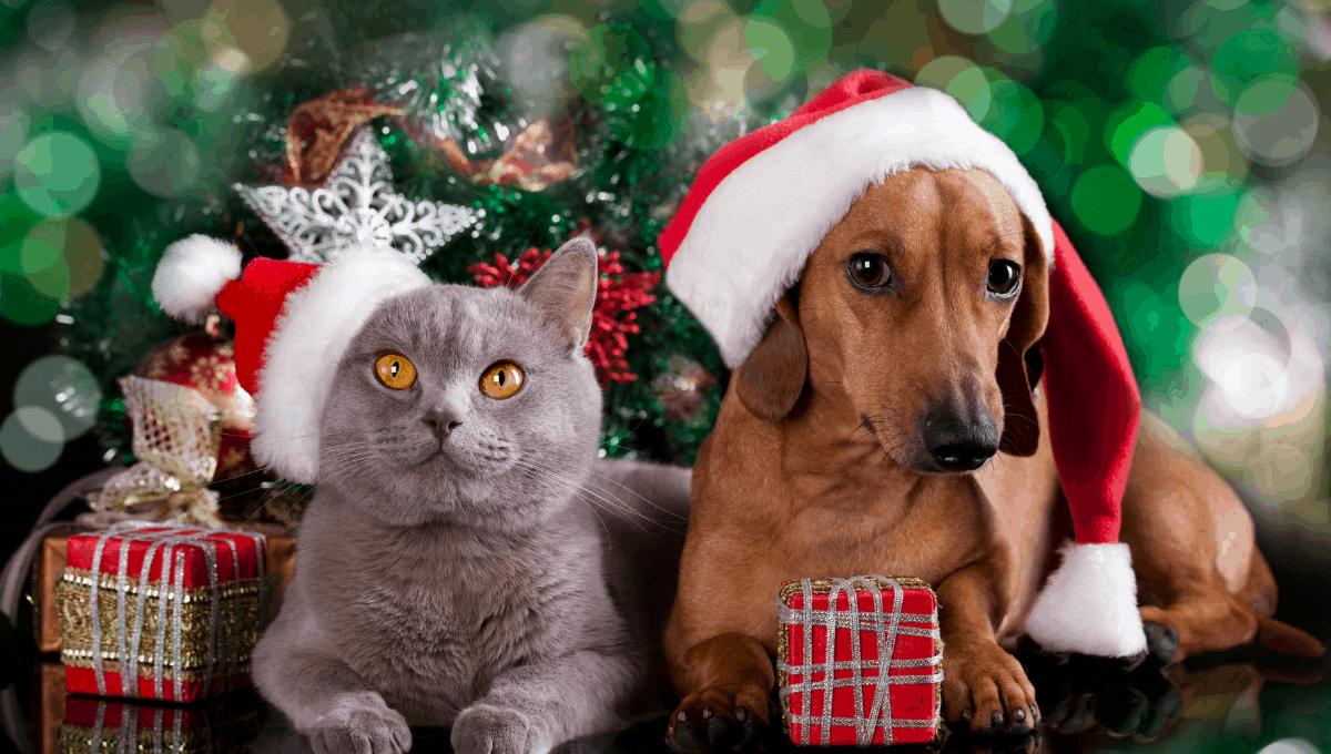 Where to Get Pet Santa Photos in Brisbane in 2021