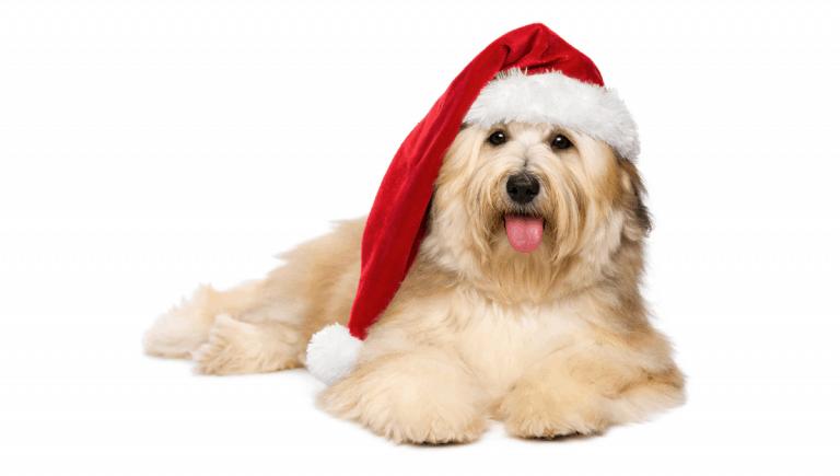 Where to Get Pet Santa Photos in Sydneyv