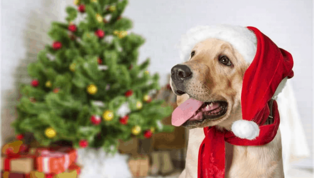 Festive Gifts for Dog Lovers in Australia