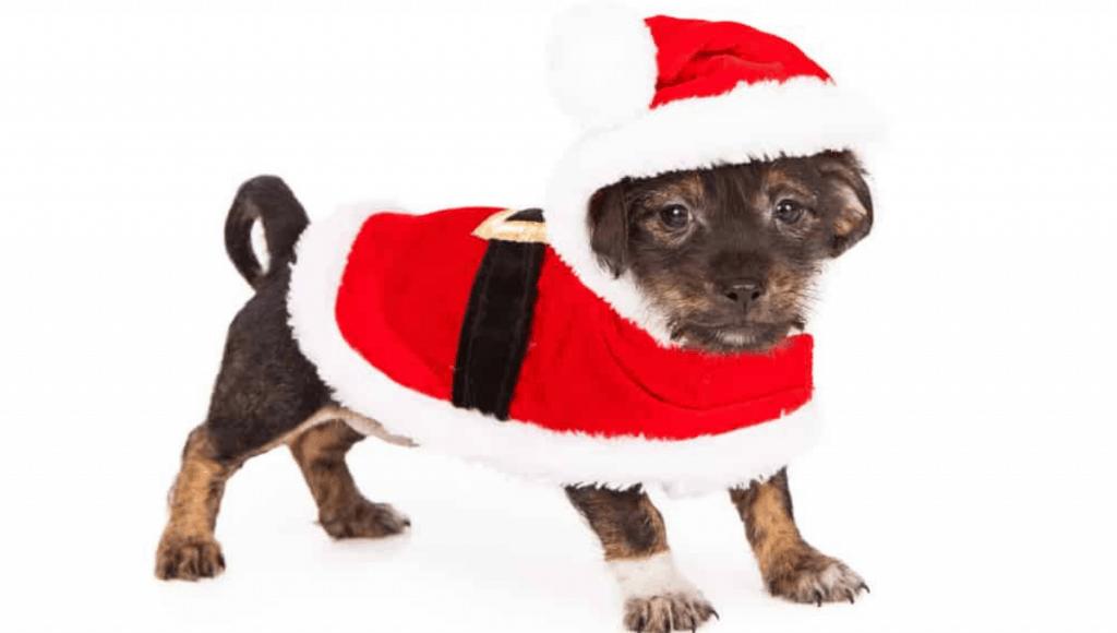 dog Christmas costumes