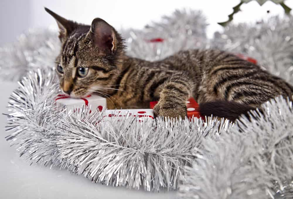 gifts for cat lovers Australia