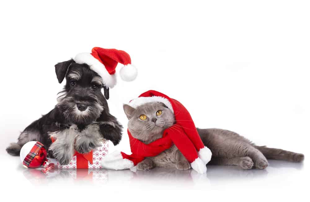 cat and dog Christmas costumes