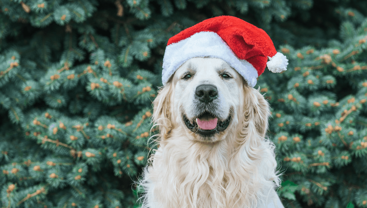 Where to Get Pet Santa Photos in Adelaide