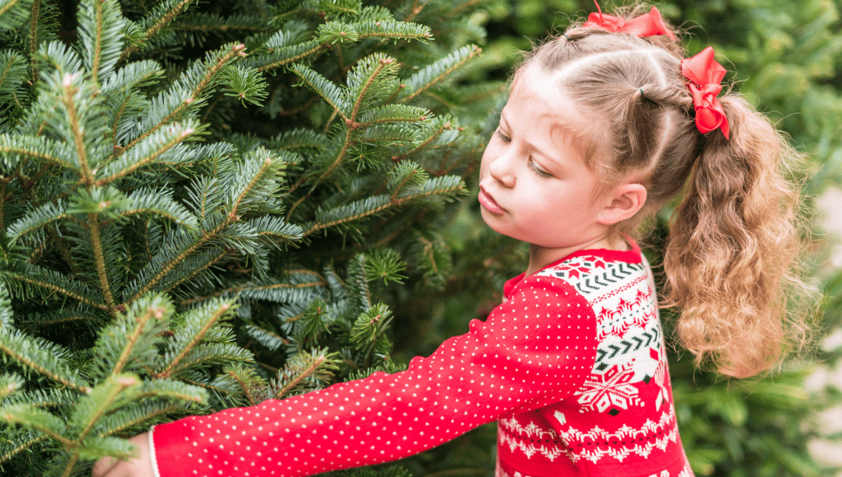 Where to Buy a Real Christmas tree Gold Coast
