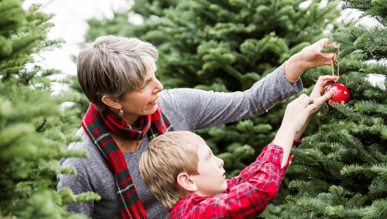 Where to Buy a Real Christmas Tree Adelaide