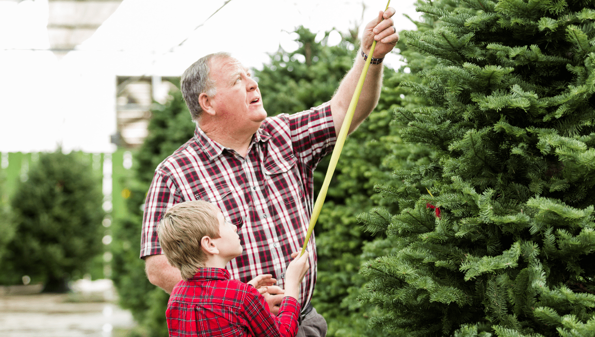 Where to Buy a Real Christmas Tree Perth